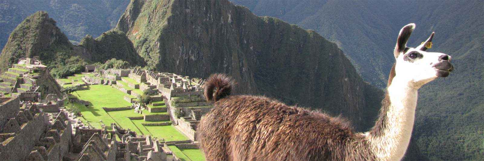Llama in the foreground of Machu Picchu